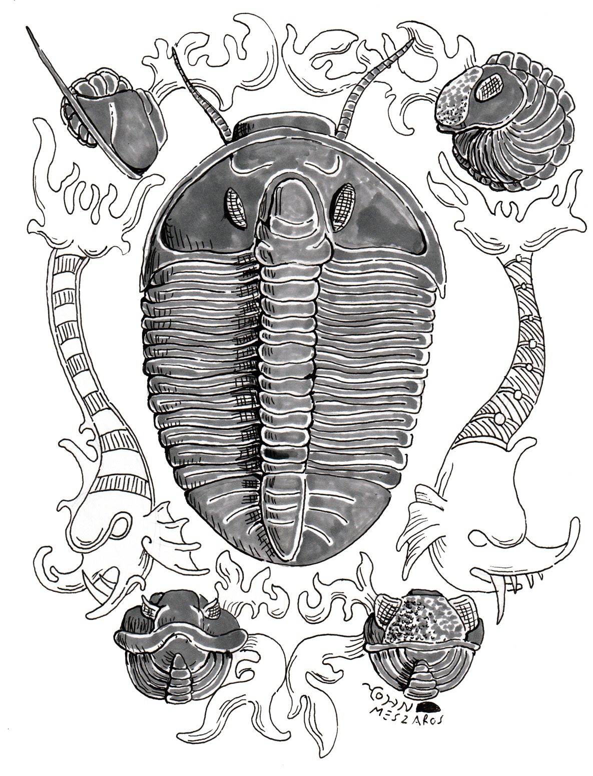 Black and white digital illustration with grey watercolour style shading. in the centre is a classically posed (dorsal) trilobite,it is very large and bug like. In each corner of the image is another trilobite curled into a ball, all different species shown from different angles. alongside the edges of the illustration are medieval style sea monsters and waves that you might expect to see on an old map. they are not shaded so they do not draw the eye like the trilobites.