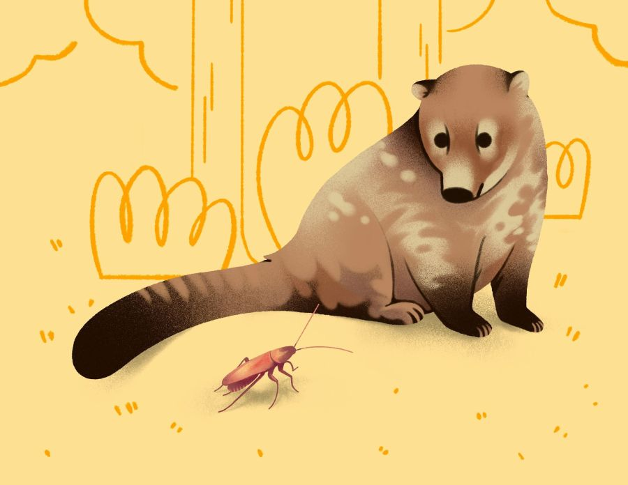 A Loxolophus sits on its hind legs and gazes cutely at a cockroach. The Loxolophus is heavily inspired by a modern coati, but is much chubbier. It has spots and striping, with a dark brown tail tip and front feet. The cockroach is reddish brown and is very pretty. They sit on a yellow backdrop with tree and bush shaped scribbles behind them.