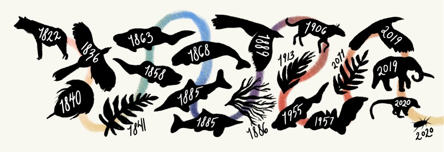 A timeline showing the topics of each poem we've featured to date (May 27, 2021) and their year of publication. A squiggly rainbow coloured line goes from 1822 to 2020. Each date is displayed on a silhouette of the animal, plant, or trace fossil that was the topic of the poem from that year.